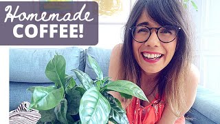 Coffee Plant care | Coffea arabica houseplant care