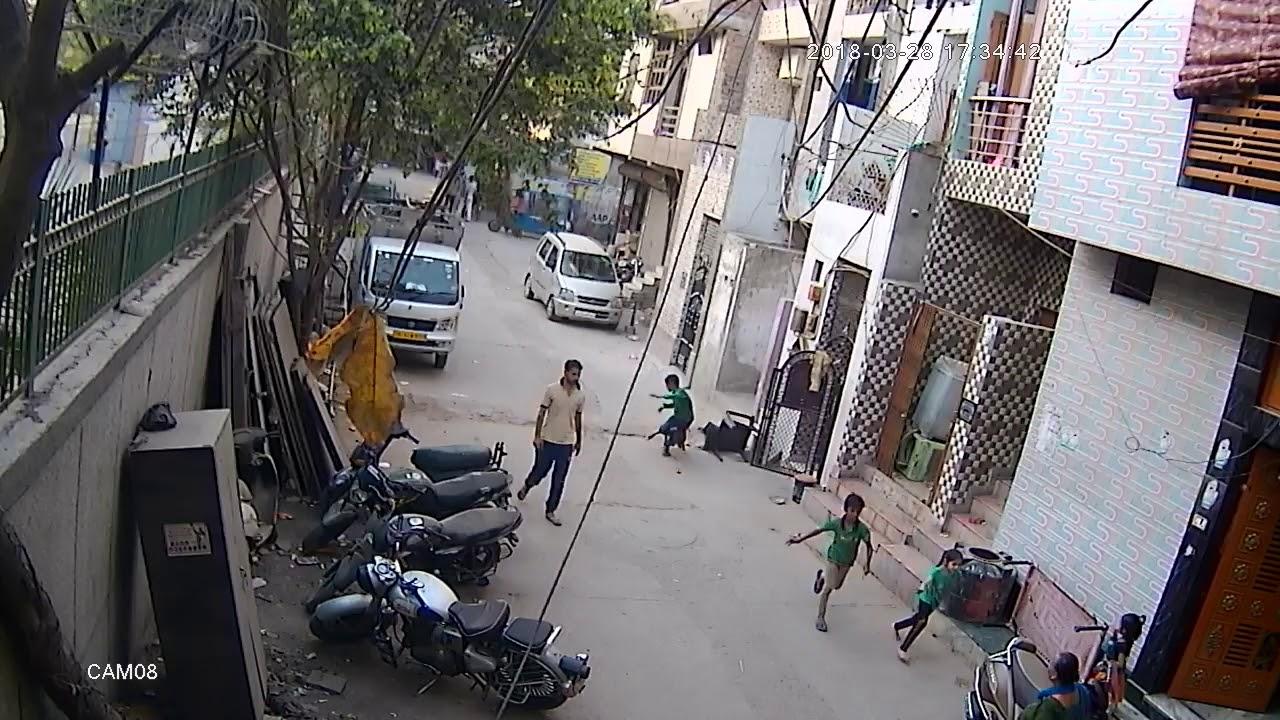 Агрессивный питбуль в Дели