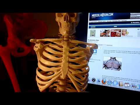 Lensemble des exercices pour la poitrine des muscles pour les hommes