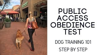 Dog Training 101 Step by Step Basic Obedience Golden Retriever Common Problems