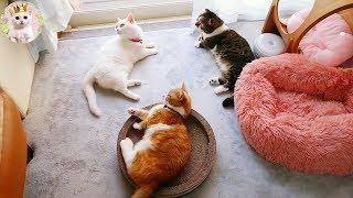 窓辺に集まる猫たち Cats gather by the window.