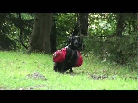 Ruff Wear New Palisades Pack Hunderucksack Rucksack für Hunde Packtaschen Hund