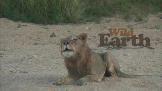 WildEarth - Sunrise Safari - 7 April 2020