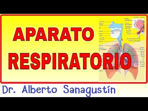 Hipertensión de grado 2 4 que el riesgo es