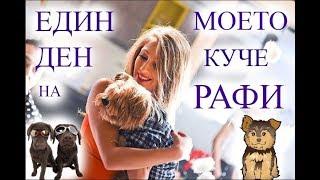 Един Ден с Моeто Kуче Рафи/Ася Енева/One Day with My Dog/Asya Eneva
