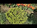 Съёмка в 4k Google Camera на Leeco X522 Aex 6.5 Official