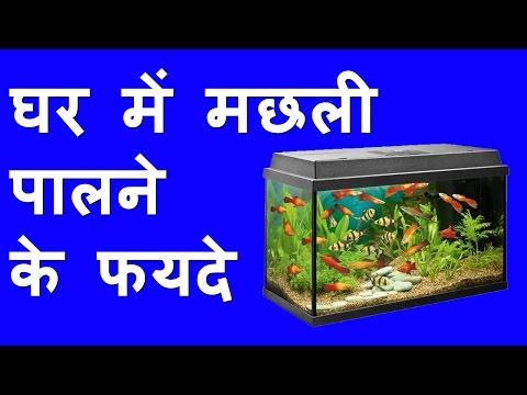 फिश एक्वेरियम और वास्तु टिप्स घर के लिए Fish Aquarium Removes all Vastu Dosh