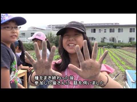 【伊丹市広報番組】伊丹だより2019年11月4日号 市政情報「小学生が農業を体験!有岡小学校大根プロジェクト」