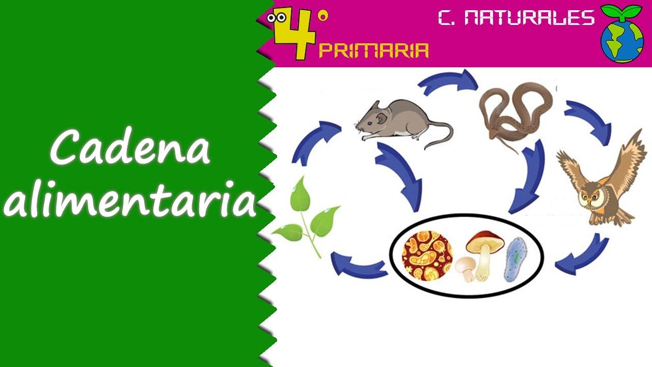 Ciencias de la Naturaleza. 4º Primaria. Tema 5. Relaciones entre los animales de un ecosistema