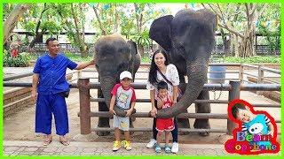 น้องบีม | ช้างจระเข้มายากล เที่ยวนครปฐม ฟาร์มจระเข้สามพราน