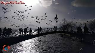 preview picture of video 'Konya Beyşehir Aşk Adası ve Uçuşan Kuşlar - yakupcetincom'