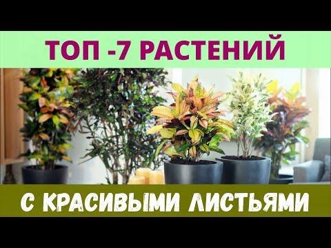 Самые необычные комнатные растения с красивыми листьями