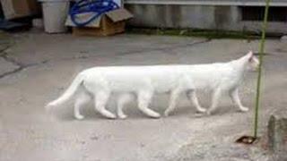 Funny kitten videos   Funny kittens videos   Funny cat videos   Funny cats videos