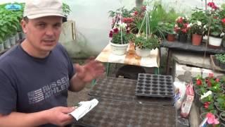 Посев огурцов на рассаду видео