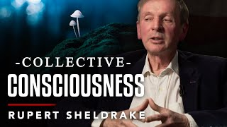 PSYCHEDELICS AND COLLECTIVE CONSCIOUSNESS - Rupert Sheldrake | London Real