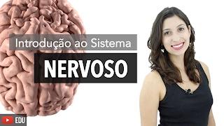 Sistema Nervoso: Introdução   Anatomia e etc.