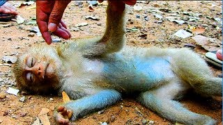 Awesome ! Save life of abandoned small monkey from dog | To be continue