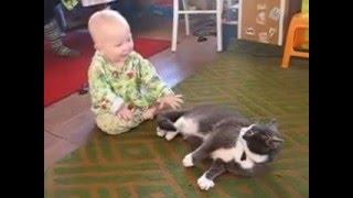 Мой видеоархив. Охота младенца на кота