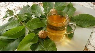 Листья грецкого ореха природное снадобье, которое самое время заготовить впрок