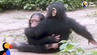 Baby Chimp Rescued from Chains is Finally Happy and Free | The Dodo | Kholo.pk