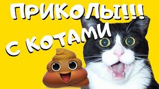 Коты | Копейки | Кошки | Приколы с кошками | Весёлые котики