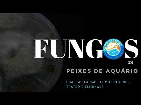Como lutar contra um fungo entre a duração de dedos