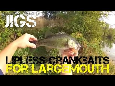 Bass Fishing- Jigs and Lipless Cranks for Largemouth