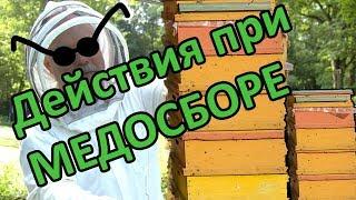 """Пчеловодство вслепую! """"Действия при медосборе"""" #пчеловодство #медосбор#Расширение"""