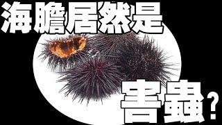 【冷知識】海膽居然是害蟲?我們都在吃海膽的「生殖器」!?| 鈞發現 |
