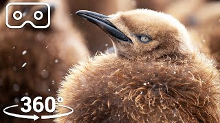 The Fluffiest Chicks Of Antarctica | VR 360 | Seven Worlds, One Planet