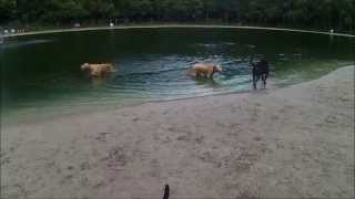 Day at the DogWood Dog park Jacksonville Florida