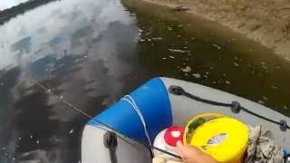 Рыбалка на томи в осиновом плесе