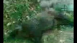 demirciköy yaban domuzu avi