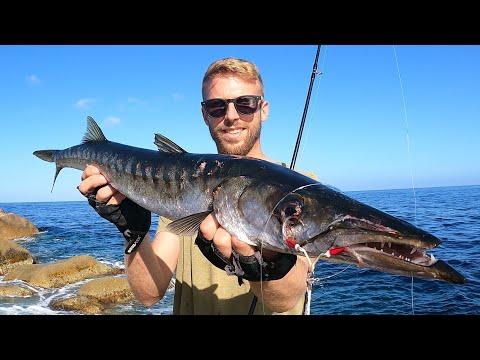 Barracuda fiskeri på kysten