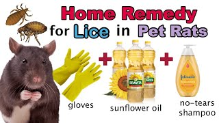 How to get rid of lice, mites and fleas in pet rats. Home remedy.