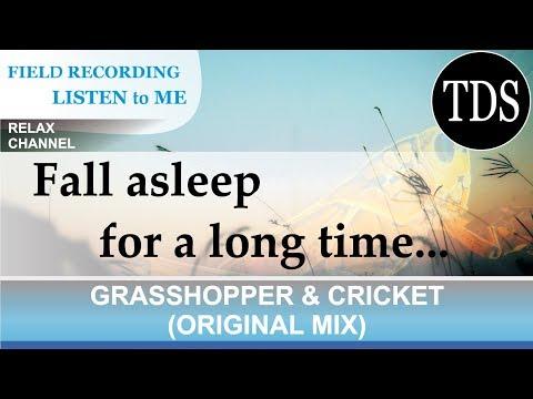 Ⓩ GRASSHOPPER & CRICKET (original mix) | Приятные звуки сверчков для СНА / 蝗虫