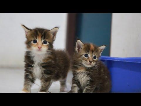 Video Gendutin Kucing : Review Makanan Kucing Basah Merk Princess