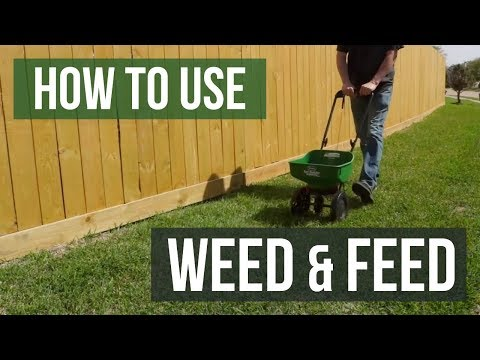 How to Use Weed and Feed Fertilizer