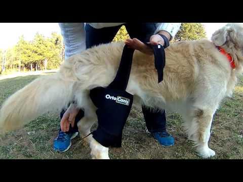 Ecografía de la foto articulación de la cadera antes y