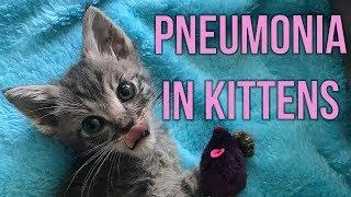 Helping Kittens Survive Pneumonia