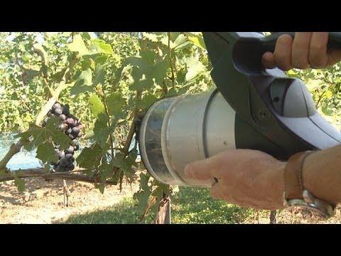 Высокие технологии и вино - хи-теч
