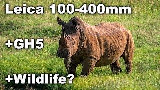 Panasonic Leica 100-400mm on GH5 Wildlife Test - Photos + Video