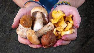Похлёбка из Трёх видов Грибов. Вкуснее, чем грибной суп.