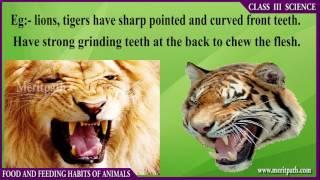 Class III CBSE SCIENCE Food And Feeding Habits Of Animals