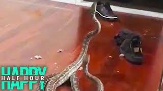 Woman Calmly Explains Why Snakes Fell Into Her Living Room | Kholo.pk