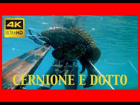 Video che pesca nellestate su uno zherlitsa