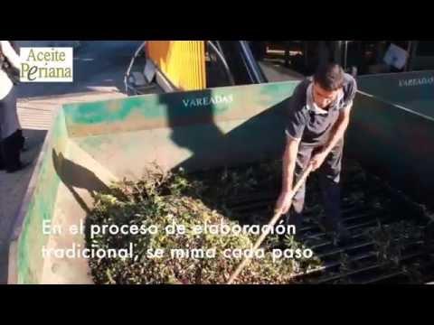 El aceite verdial de Periana