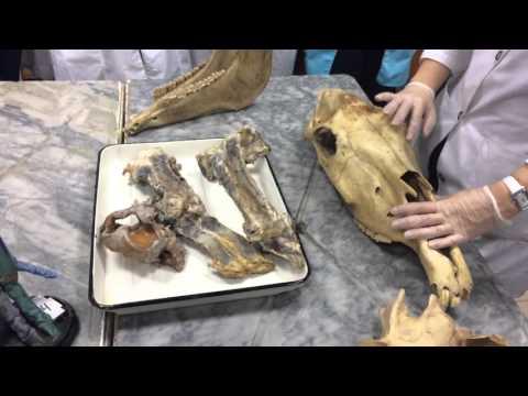 Синдесмология. Соединение костей осевого скелета.
