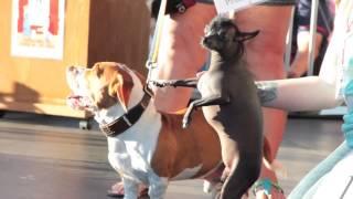 Победитель конкурса самых уродливых собак мира