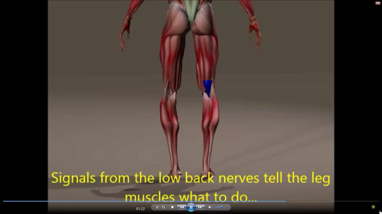 Stem Cell Therapy maxresdefault - Do You Have Fibular Head Pain? Here's What To Do
